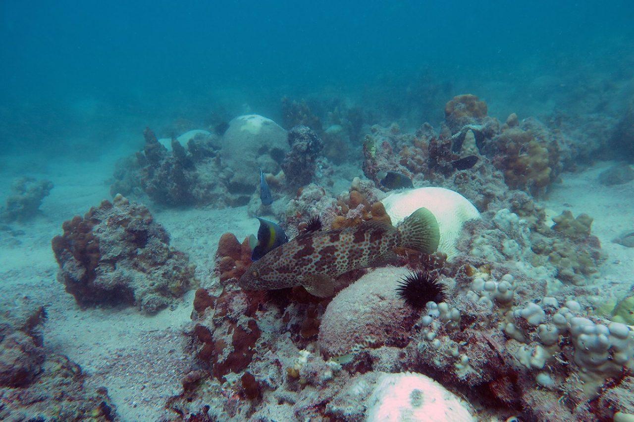 Marine biology lab research