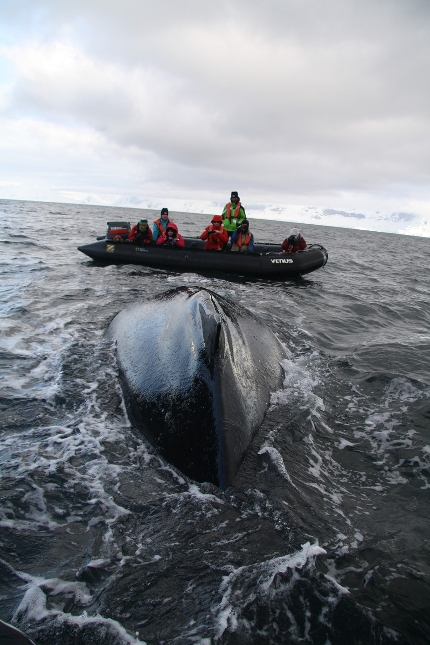 A whale breaches in Antarctic waters. Captured by NYUAD student Fisher Wu.