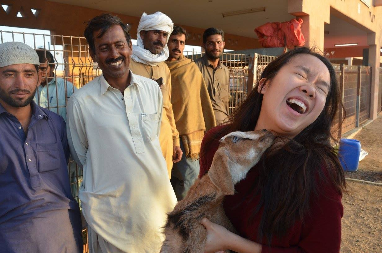 NYUAD student Sue-Ann Lau gets up close with a goat during J-Term studies in Al Ain, UAE.