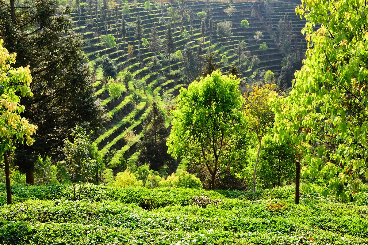Resident Expert: Getting to the Roots of Chinese Forest Policy