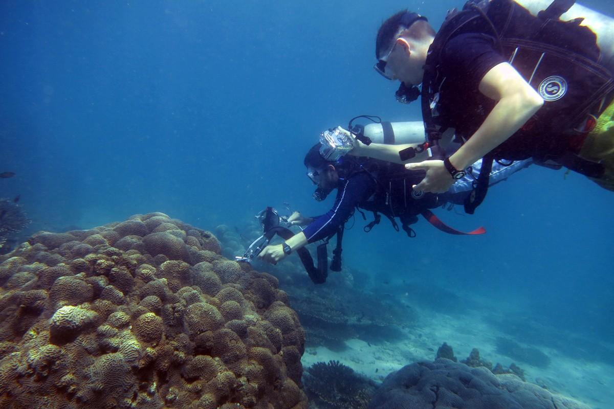 Exploring the Mystery of Arabian Gulf Coral
