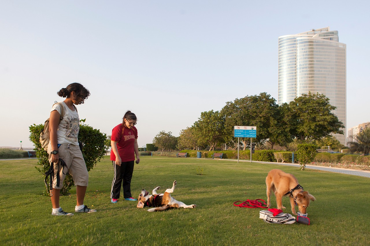 Children and their dogs at a park in corniche Abu Dhabi.