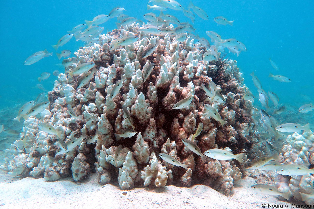NYUAD Center Wins Grant From India to Study Monsoon