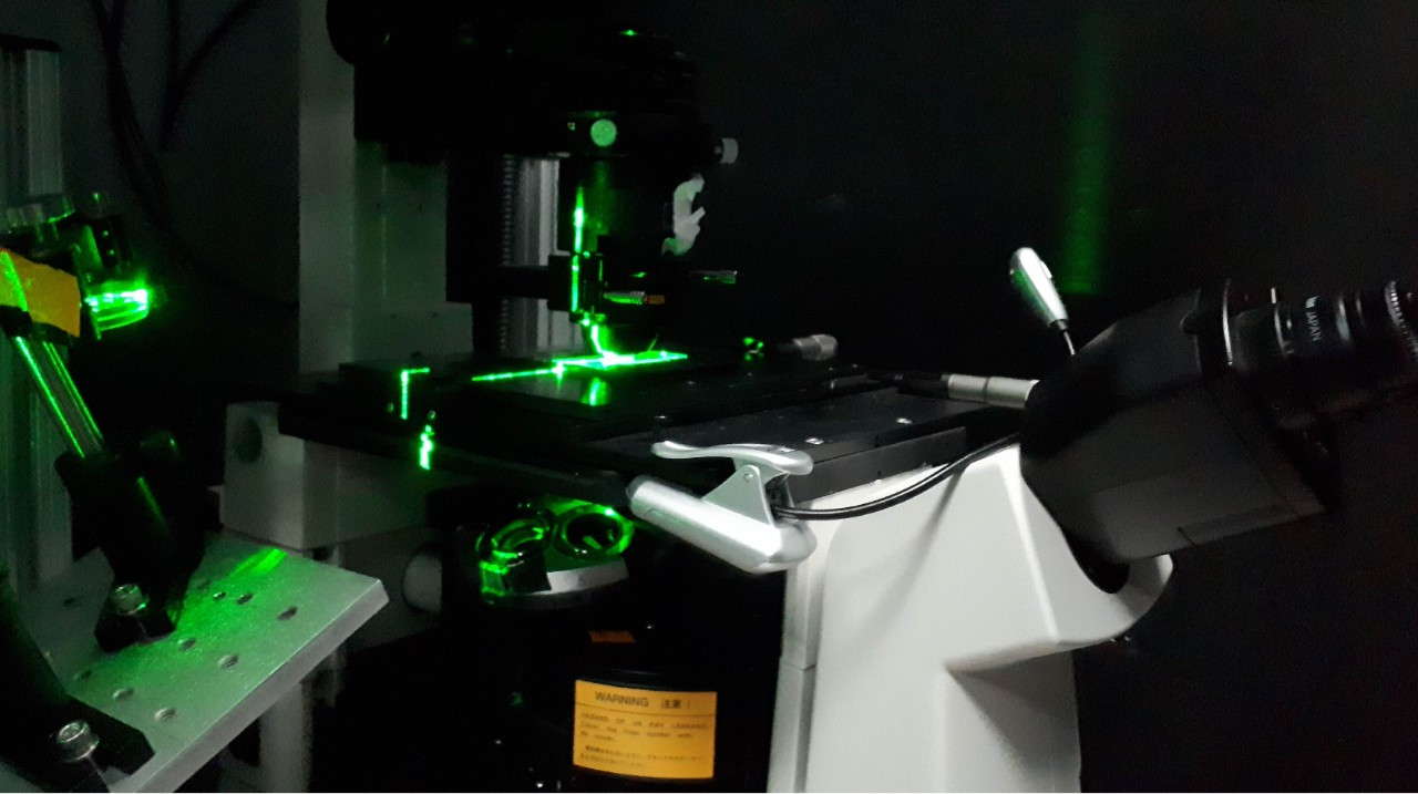 The researchers used high resolution microscopy and laser optical tweezers to study motor proteins.