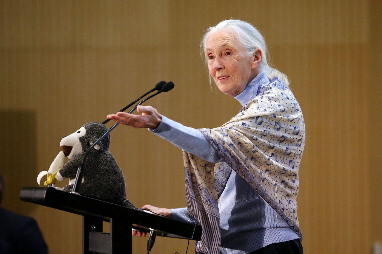 Dr. Jane Goodall at NYU Abu Dhabi