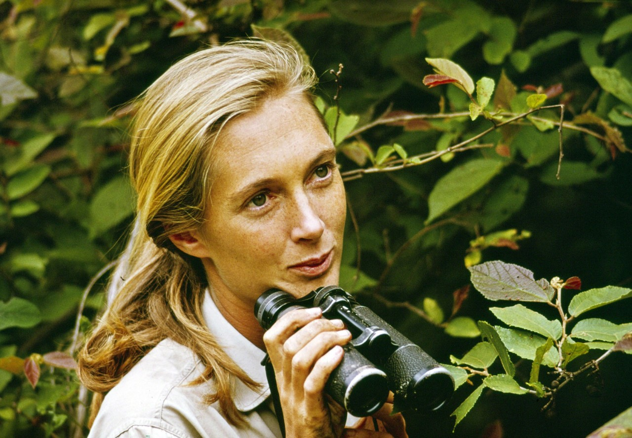 Jane Goodall in Imagine Science
