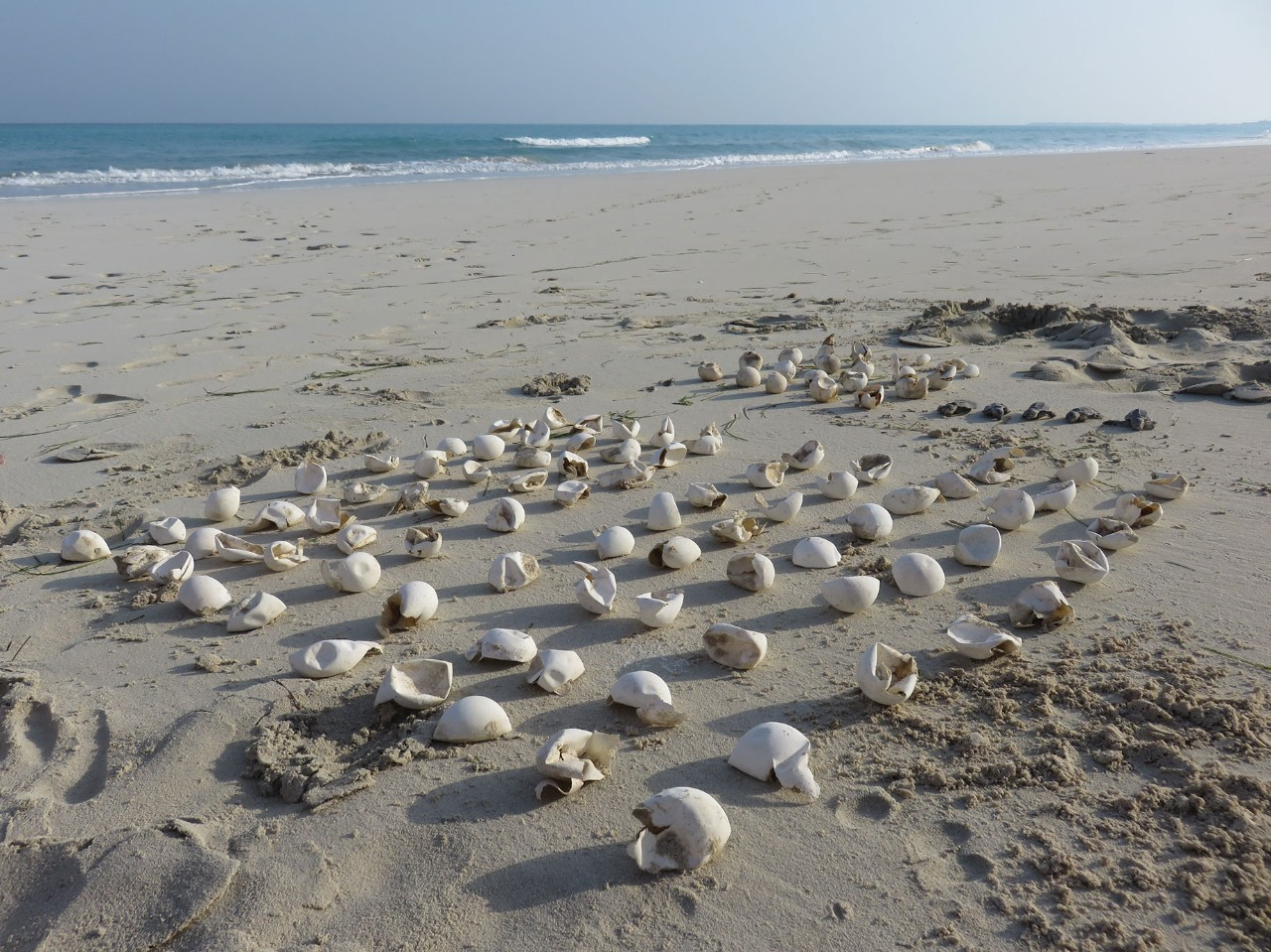 An inventory of hatched turtle eggs Saadiyat Beach in 2017. Courtesy of Arabella Willing