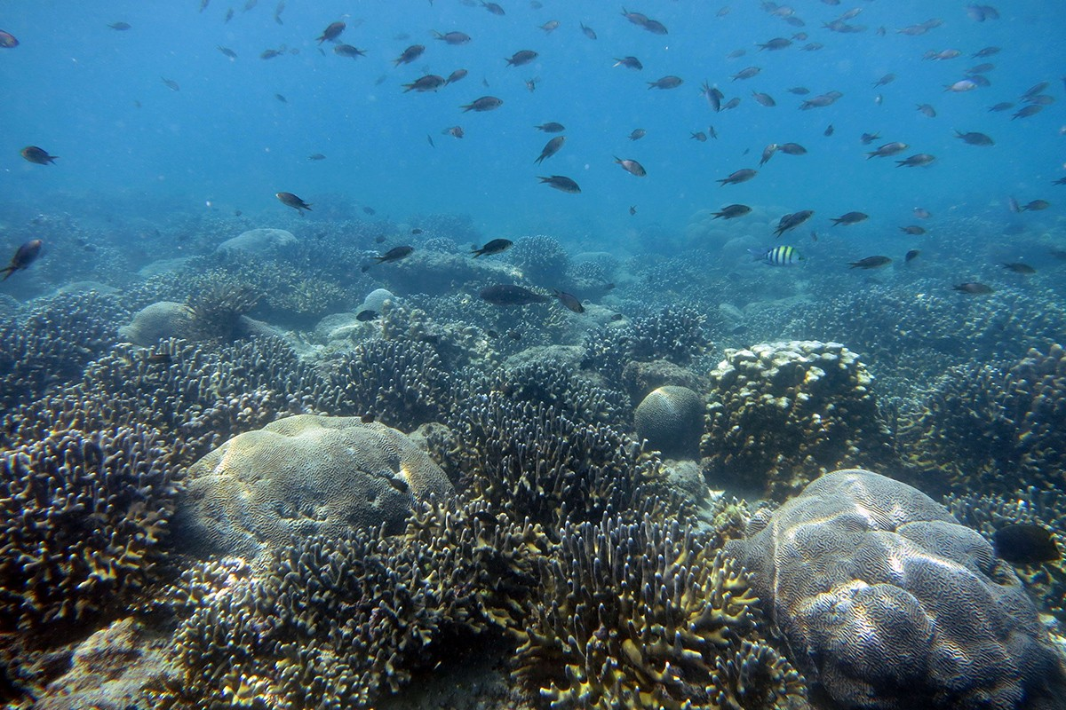 Recovering the Coral Reef Communities of the Gulf