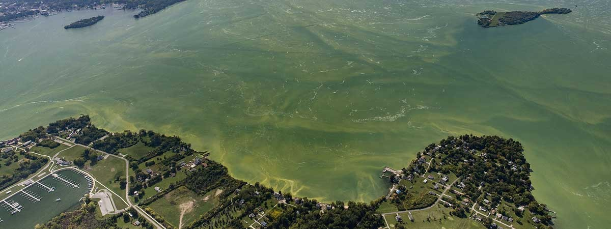 An aerial view of a large harmful algal bloom in Lake Erie, September 2017. Photo credit - NOAA Great Lakes Environmental Research Laboratory