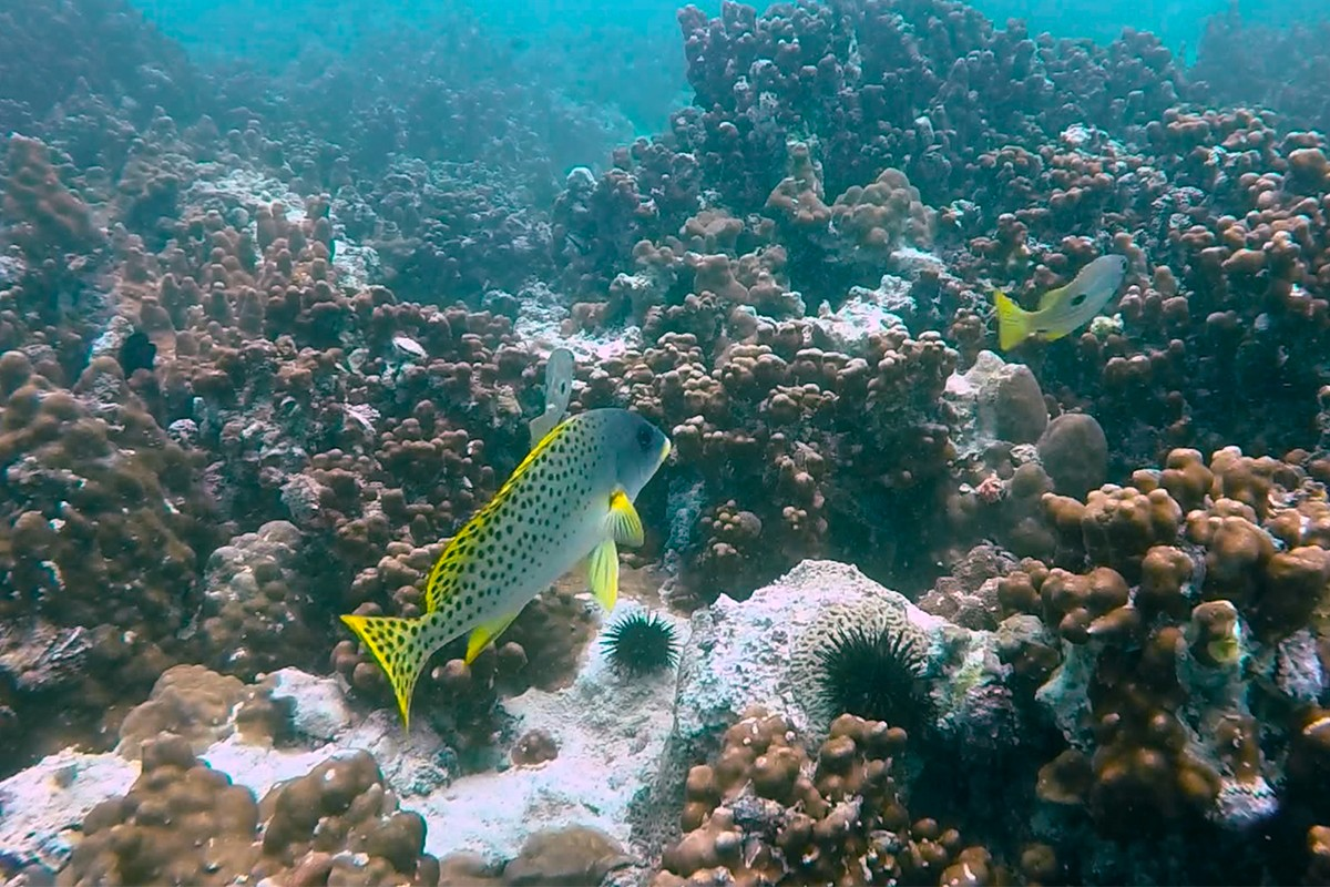 20170504_Research_report_reefs.jpg