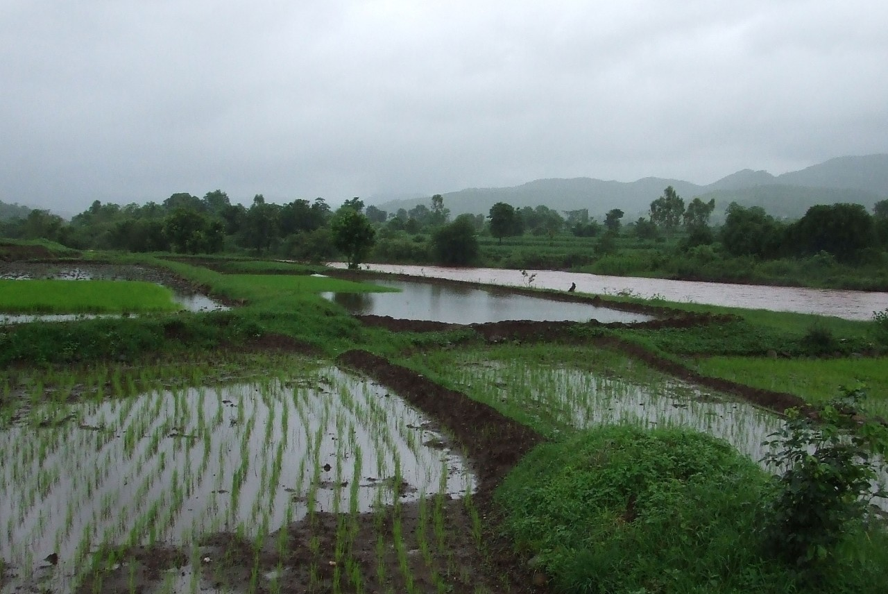 Investigating India's Evolving Monsoon