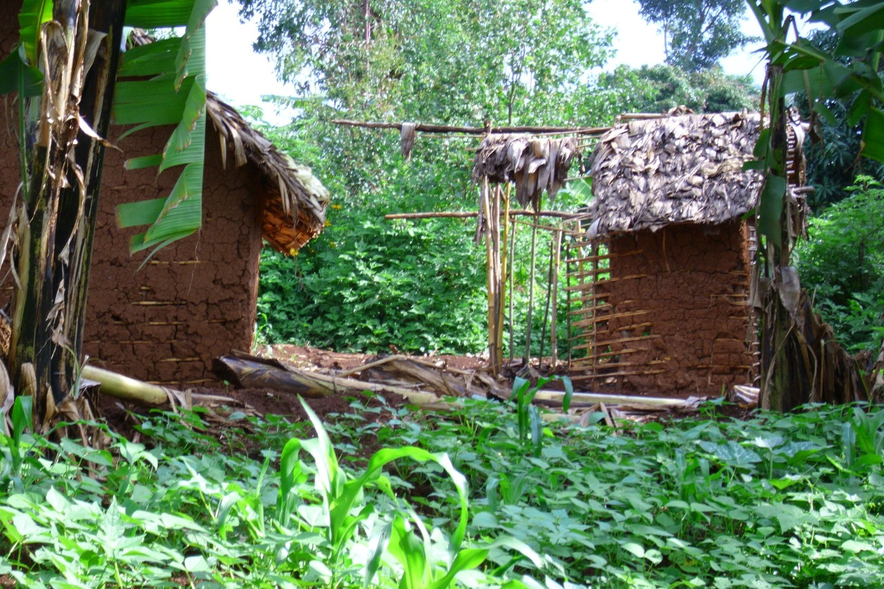 A house in the Democratic Republic of the Congo, the site of van der Windt's research study.