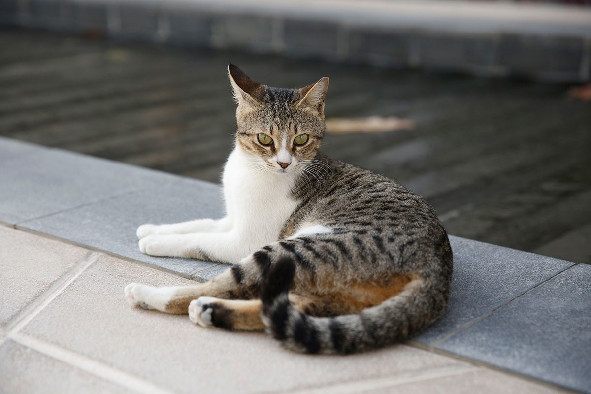 One of the resident street cats that live around the NYU Abu Dhabi campus.