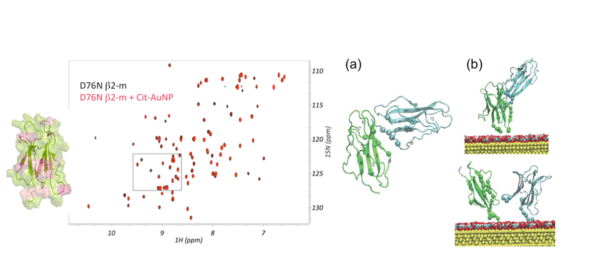 Figue 01:NMR-based mapping - D76N b2-mD76N b2-m + Cit-AuNP  Figure02: NMR-based mapping - D76N b2-mD76N b2-m + Cit-AuNP